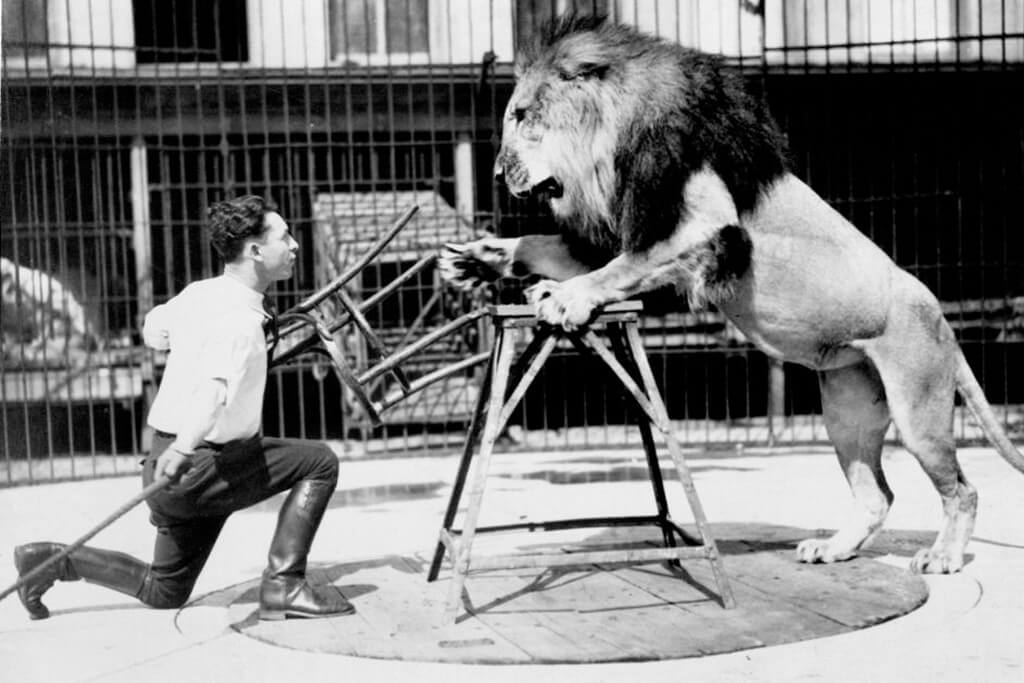 lessons on how to focus and concentrate from lion tamer Clyde Beatty