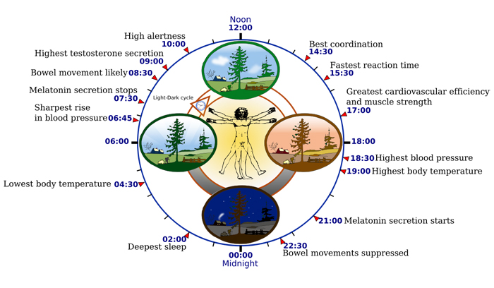 Learn how to sleep better by understanding the circadian rhythm